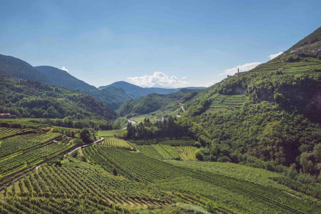 trentino terra di vino