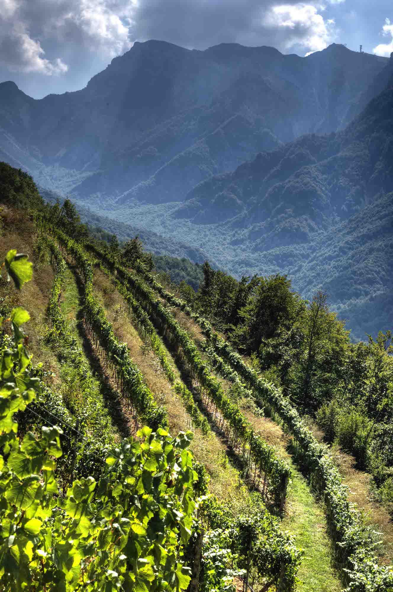 albino armani-cantina vini