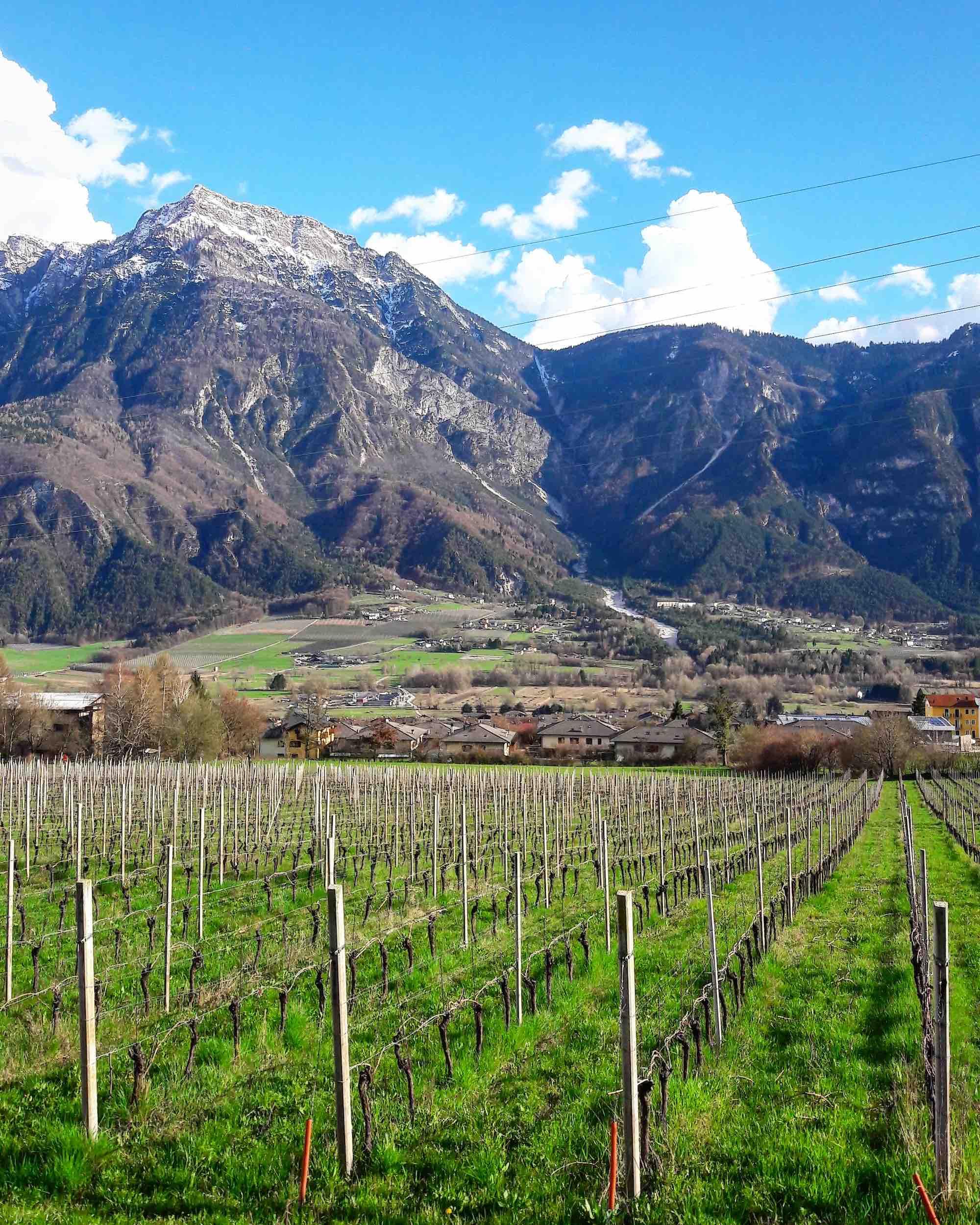 vigne cantina romanese levico terme