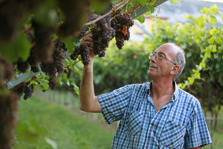 Azienda albino martinelli vini