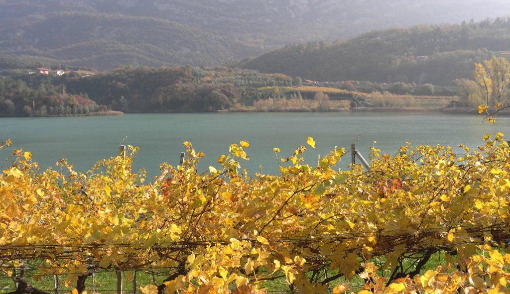 Vendemmia Saros lago Santa Massenza