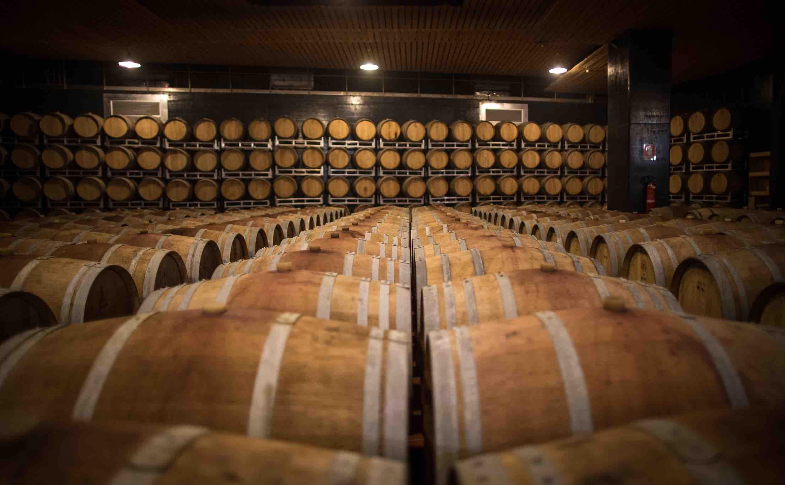 cantina lavis-vini del trenitno