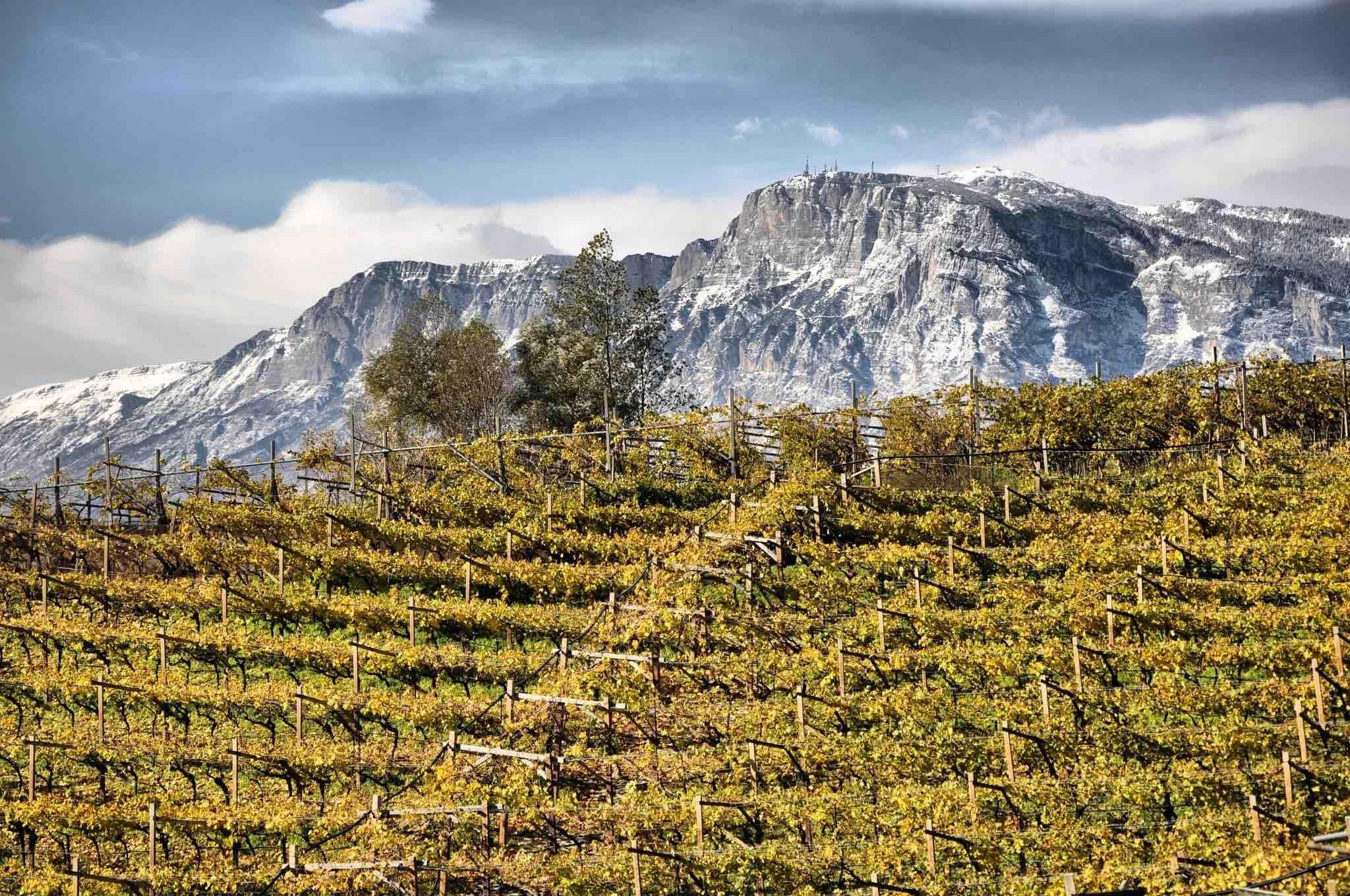trentino alto adige-vino-villacorniole-valledicembra-12 - Maddalena Nardin Villa Corniole