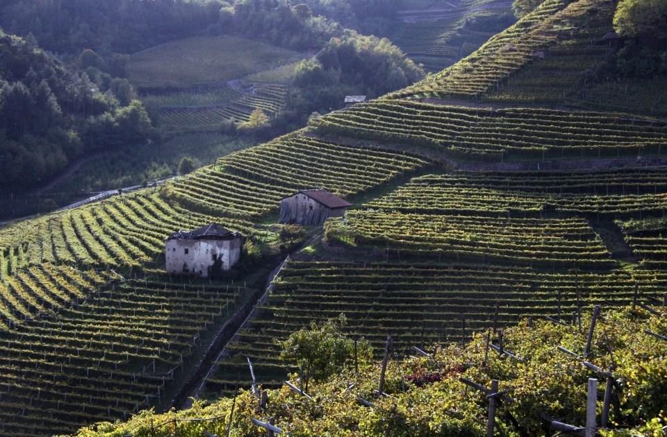 trentino alto adige-vino-villacorniole-valledicembra-2 - Maddalena Nardin Villa Corniole
