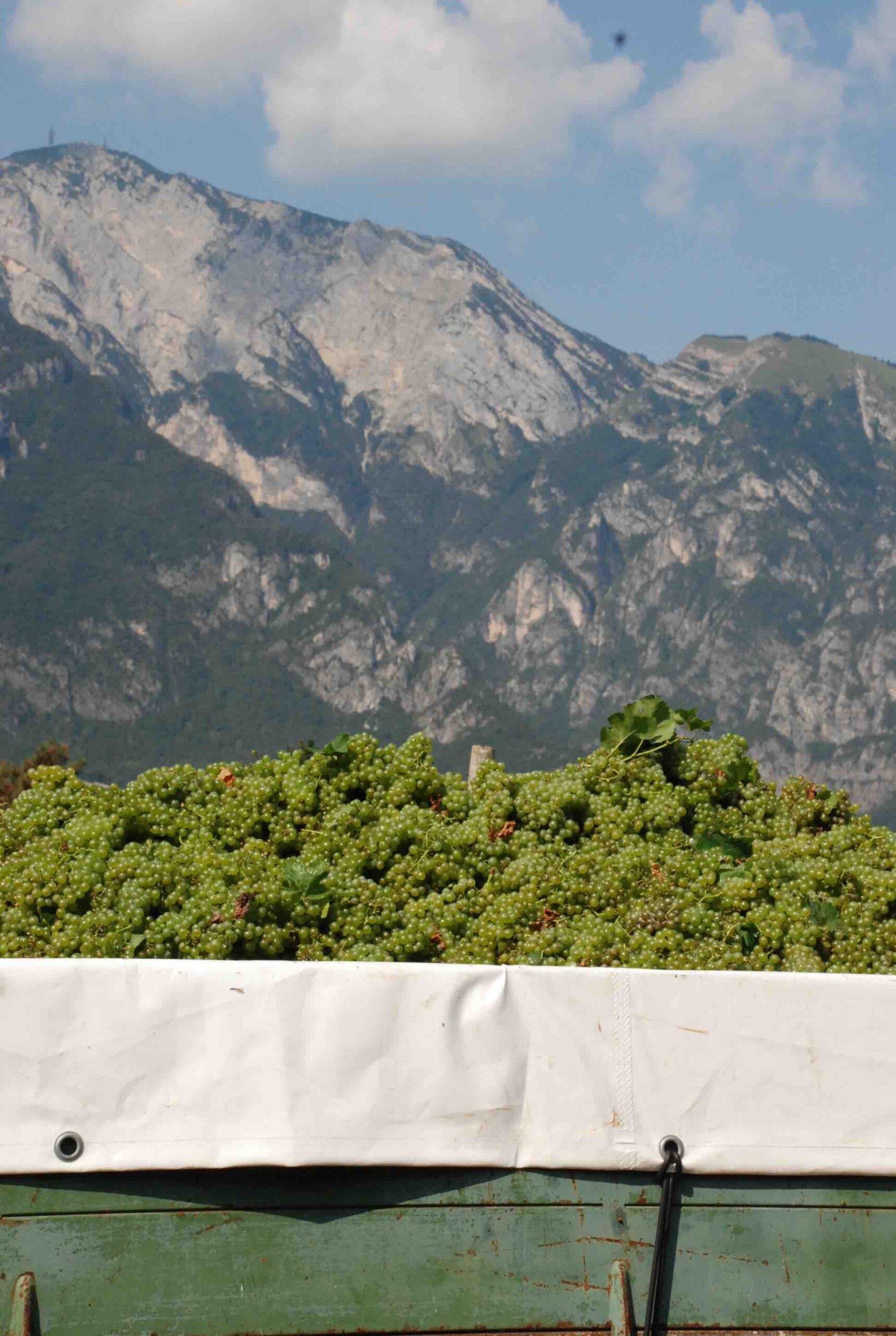 uva e montagna LeVIDE TRENTINO
