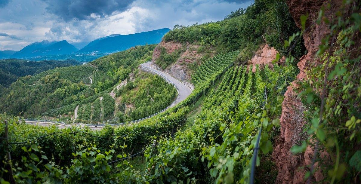 val di non viticoltura trentino