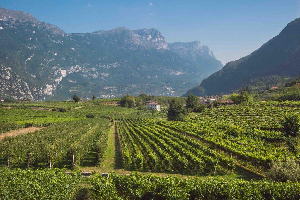 Valle dei Laghi, Trentino, estate 2015.